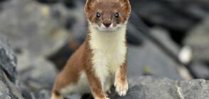 КРАСИВИ И СМЪРТОНОСНИ: Най-сладките опасни животни на планетата (ГАЛЕРИЯ)