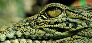 СМЕЛО СЪРЦЕ: Мъж бръкна в устата на крокодил, за да спаси кучето си (ВИДЕО)
