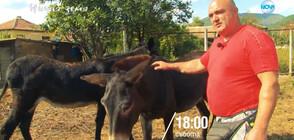 """""""Ничия земя"""": От магарешки инат - бивш културист днес отглежда коне и магарета"""