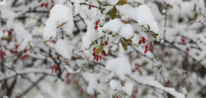 Очакват ли ни още снеговалежи тази седмица?