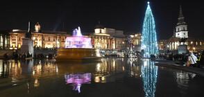 За пръв път в историята: Палят дистанционно светлините на елхата в Лондон (ВИДЕО)