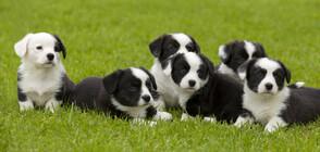 Активисти спасиха 79 кученца от продажбата им за месо в Китай