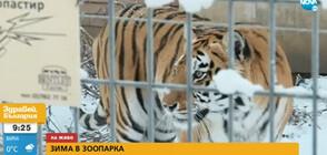 Животните в Софийския зоопарк се зарадваха на първия сняг (ВИДЕО)