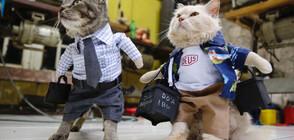 Модерни котки (ГАЛЕРИЯ)