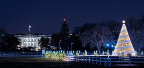 Запалиха светлините на Националното коледно дърво в Белия дом