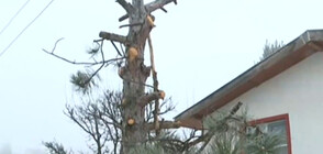 Мъж обвинява Енергото в изсичането на дръвчета в двора му (ВИДЕО)