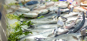Откриват рибен пазар на 5 и 6-ти декември в София