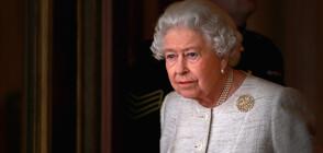КРАЛИЦАТА СКЪРБИ: Едно от кучетата на Елизабет II е починало (СНИМКИ)