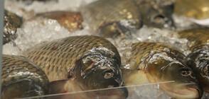 ПРЕДИ НИКУЛДЕН: Рибен пазар в центъра на София (ВИДЕО)