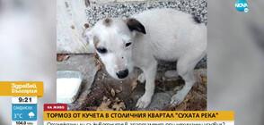 ЖЕСТОКОСТ: Кучета, заключени в апартамент, се самоизяждат? (ВИДЕО)