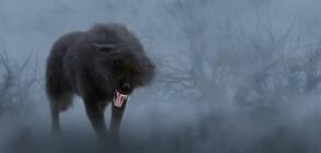 Показаха снимки на вълк, живял преди 56 хиляди години (ВИДЕО+СНИМКИ)