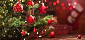 Как ще празнуват Коледа любимите лица от екрана на NOVA (ВИДЕО)