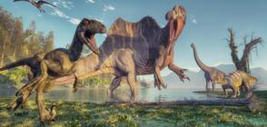 Откриха останки на динозавър, който може да е бил най-голямото животно на Земята (СНИМКИ)