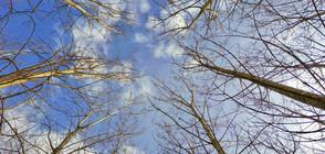 Ветровит уикенд с пролетни температури