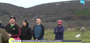 Доброволци залесяват изгоряла гора край Шумен