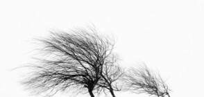 Жълт код за опасен вятър в цялата страна