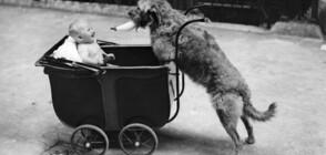 ГЕРОЙСКИ ЛАЙ: Куче заведе мъж до бебе, изоставено в сметище (СНИМКИ)
