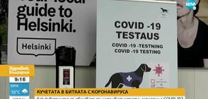 Кучетата в битката с COVID-19