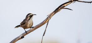 Птица, невиждана от 172 години, е открита в Индонезия (СНИМКА)