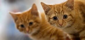 Френски меценат включи котките в Ермитажа в завещанието си (СНИМКИ)