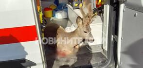 Какво е състоянието на простреляния в София сръндак