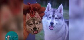ПО РЕАЛЕН ОБРАЗ: Дизайнер създава мартеници с кучета (ВИДЕО)