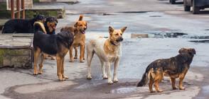 Бездомни кучета тормозят жителите на столичен квартал