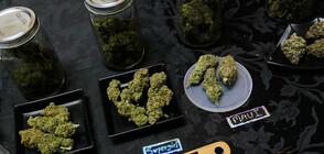 В Северна Македония конфискуваха марихуана за над 1 млн. евро