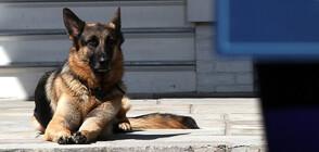 Изпращат едно от кучетата на Байдън на дресировка
