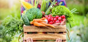Повишават се цените на основни хранителни продукти (ВИДЕО)