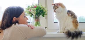 Какво означават тайните послания на котките