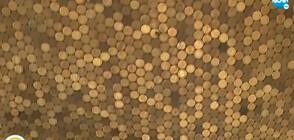 Семейство облицова тавана си със стотинки (ВИДЕО)