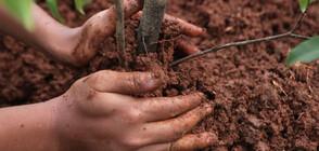 ЗА ПО-ЧИСТ ВЪЗДУХ: В София засаждат над 1700 дървета (ВИДЕО)