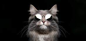 Назначиха котка за началник на полицейско управление (ВИДЕО)