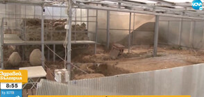 Уникална тракийска могила тъне в разруха (ВИДЕО)