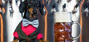 Пивоварна търси куче дегустатор на бира, дава 20 хиляди долара
