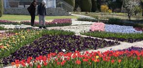 Феерия от лалета в Ботаническата градина в Балчик (ГАЛЕРИЯ)
