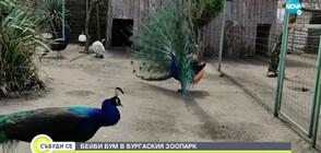 Бейби бум в Зоопарк Бургас