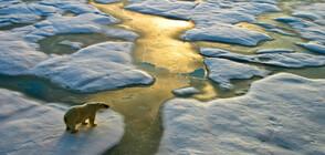 Google показва как промените в климата влияят на Земята