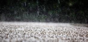 СЕЗОНА НА ГРАДУШКИТЕ: Защитени ли са земеделските територии у нас?