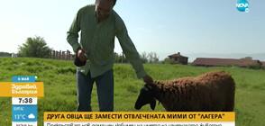 """Друга овца ще замести отвлечената Мими от """"Лагера"""""""