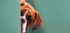 1800 кучета от приюти в София търсят осиновители (ВИДЕО)