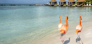 Аруба: Непознатият Рай на Карибите (ВИДЕО)