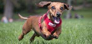Учени установиха кои кучета могат да се обучат най-лесно на трикове