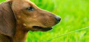 """Хората могат да """"заразяват"""" кучетата със стрес"""