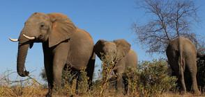 Мълния уби стадо слонове в Индия (СНИМКА)