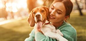 Кучетата изпитват стрес като стопаните си