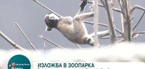 """Откриха изложбата """"Застрашени животни в Софийския зоопарк"""" (ВИДЕО)"""