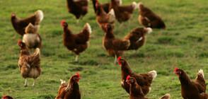 Първи случай на заразен човек с щама H10N3 на птичия грип в Китай