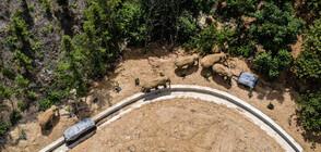 Пътешествието на стадо слонове (ГАЛЕРИЯ)